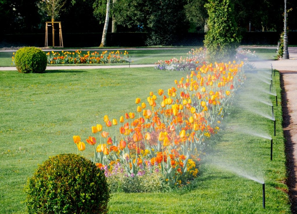 Watering the lawn using an automated water sprinkler system